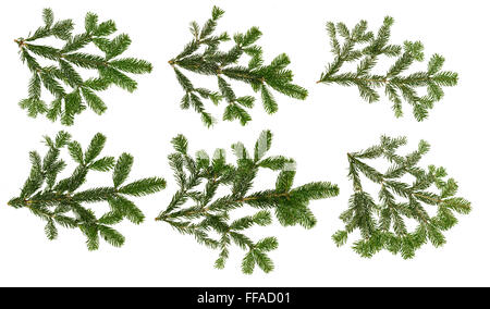 collection of fir branches isloated on white background - Stock Photo