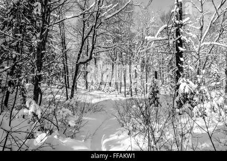 Winter scene in black and white after snowstorm in Quebec, Canada - Stock Photo