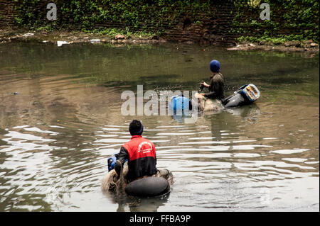 Jakarta, Indonesia. 11th Feb, 2016. Fish Hunters searching Janitor Fish (Pterygoplichthys) at River in Jakarta, - Stock Photo