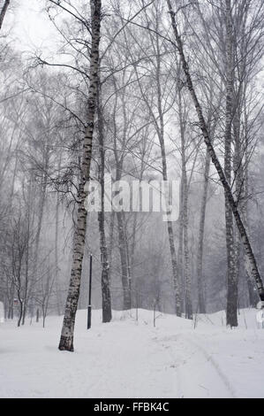 Path covered with snow in park during heavy snowfall - Stock Photo