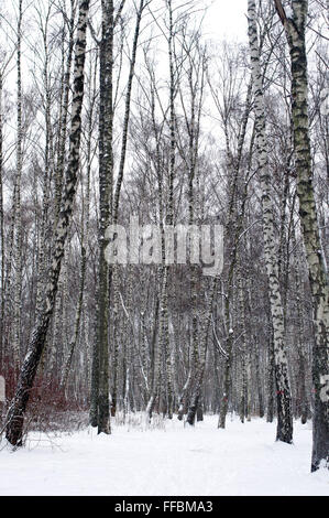 Forest covered with snow in park during heavy snowfall - Stock Photo