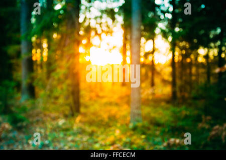 Abstract Autumn Summer Natural Blurred Forest Background. Bokeh, Boke Woods With Sunlight Green and Yellow Colors - Stock Photo