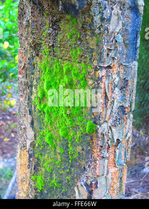 Moss growing on concrete pillar supporting irrigation canal - Stock Photo