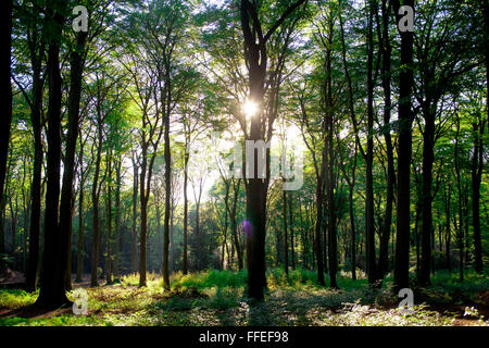 Europe, Germany, North Rhine-Westphalia, Ruhr Area, in a forest at the Ruhrhoehenweg in the Ardey mountains near - Stock Photo