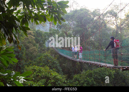 Tourists on a canopy walkway in the Danum Valley, Sabah, Malaysia - Stock Photo