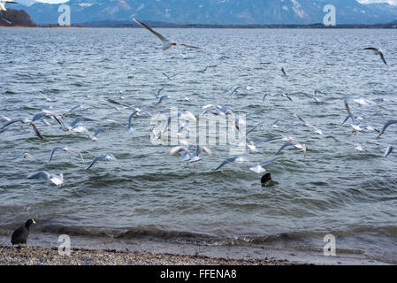 several seagulls flying on the lake with movement blur - Stock Photo