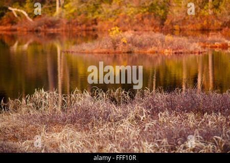 Orange foliage reflected on lake surface - Stock Photo