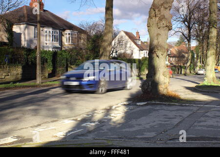 A car drives by a tree growing in the middle of a road junction on a tree lined road in Sheffield, Yorkshire, England - Stock Photo