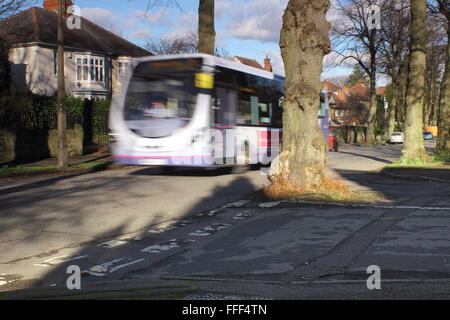 A public bus passes by a tree growing in the middle of a road junction on a tree lined road in Sheffield, Yorkshire - Stock Photo