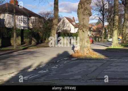 A tree grows in the middle of a road junction on a tree lined road in a leafy suburb of Sheffield, South Yorkshire - Stock Photo