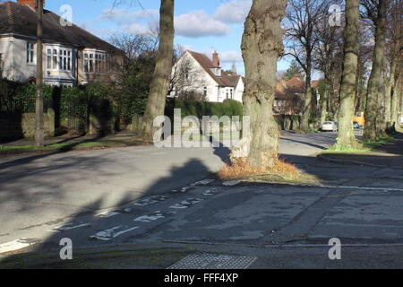 A tree grows in the middle of a road junction on a tree lined road in a leafy suburb of the city of Sheffield, Yorkshire - Stock Photo
