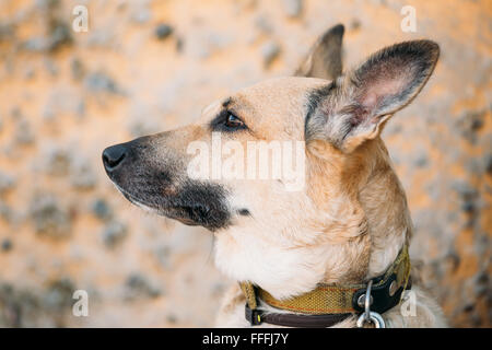 Funny Mixed Breed Medium Size Brown Dog Close Up - Stock Photo