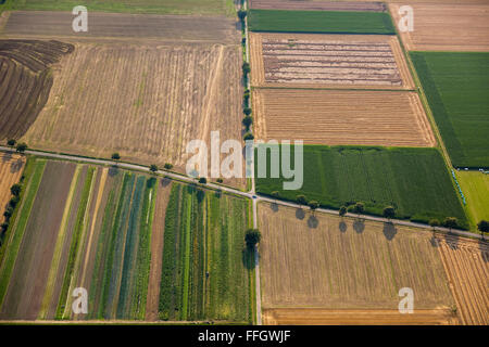 Aerial view, cruising the country roads, fields, alleys, Backlit, inheritance, crop rotation, Welver, Soester Plain, - Stock Photo