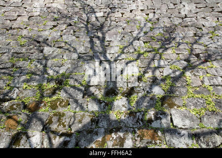shadow of tree on weathered stone wall, japanese castle - Stock Photo