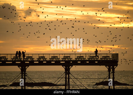 Aberystwyth, Wales, UK. 14th Feb 2016  UK weather: Birdwatchers and photographers are surrounded by a flock of thousands - Stock Photo