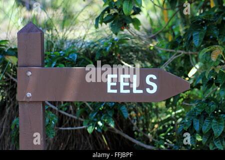 Eel Sign Post - Stock Photo