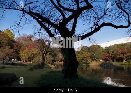 Koishikawa Korakuen Garden, Tokyo, Japan. City park in fall season, autumn foliage on trees. Japanese culture, nature, - Stock Photo