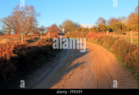 Winter landscape sandy track through heathland, Sutton Heath, Suffolk, England, UK Suffolk Sandlings AONB - Stock Photo