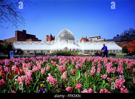 Spring flowers at the Glass House Botanic gardens Belfast Northern Ireland - Stock Photo