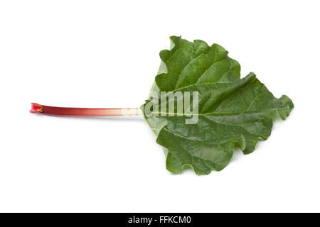Fresh Rhubarb stalk and leaf on white background - Stock Photo