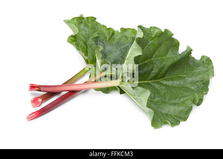 Fresh Rhubarb stalks and leaves on white background - Stock Photo