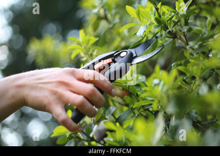 Garden tools, pruning shears. Crop plants, spring treatments. Woman ...