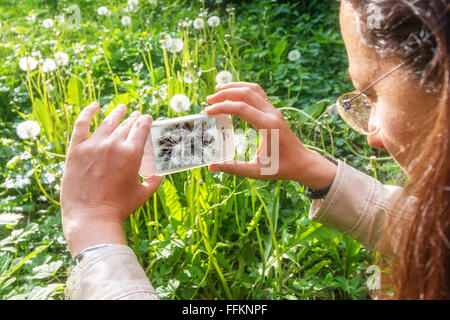Macro photography in spring from a dandelion - Stock Photo