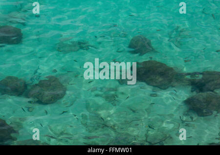 looking down on to clean clear seas showing fish and corals. - Stock Photo