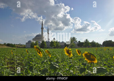 Sunflowers and Complex of Bayezid II (külliye) in Edirne, Turkey - Stock Photo
