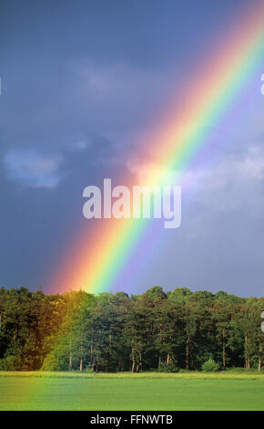 close rainbow in front of a forest - Stock Photo