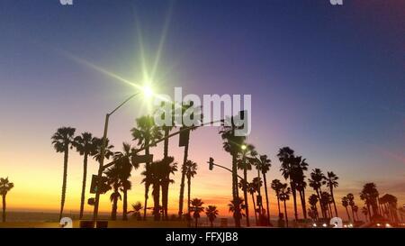 Sun Shining Over Palm Trees - Stock Photo