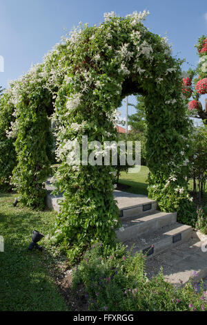 Ornamental garden arch supporting a Russian vine, Fallopia baldschuanica, in flower, Bangkok, Thailand - Stock Photo