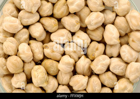 Grain , pulse chickpea chick pea chana or channa Cicer arietinum - Stock Photo