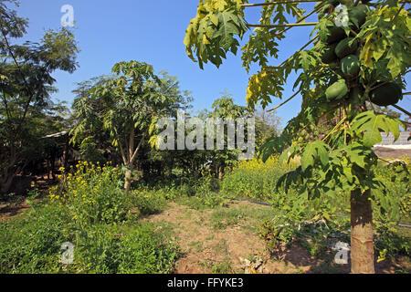 Organic farming of vegetables and fruits at Nemawar Madhya Pradesh India - Stock Photo