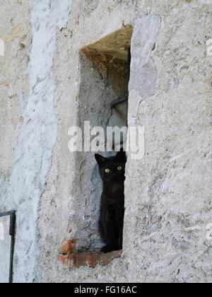 Portrait of black cat sitting on window - Stock Photo