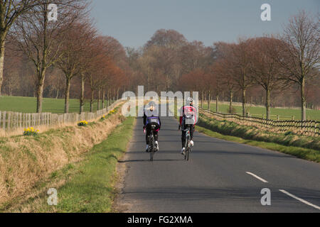 Under a blue sky, the rear view of two cyclists, exercising and cycling side by side on a straight, flat, quiet - Stock Photo
