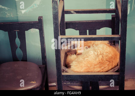 Cat Sleeping On Chair At Home - Stock Photo