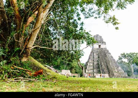 Tikal Temple I (Temple of the Great Jaguar) in the main Plaza of Tikal, Guatemala - Stock Photo