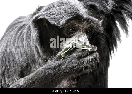 Monkey Feeding At Zoo - Stock Photo