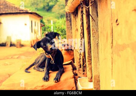 Close-Up Of Dogs Tied To Wall Resting On Sidewalk - Stock Photo