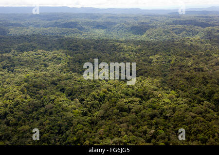 Aerial view of lowland Amazonian rainforest in Pastaza Province, Ecuador - Stock Photo