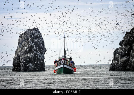 The Danny J Kachemak Bay Ferry cruises by the Gull Island sea bird rookery in Kachemak Bay, Southcentral Alaska, - Stock Photo