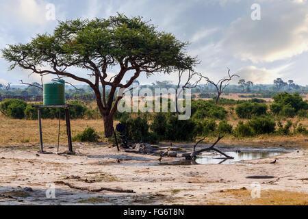 Typical Large Acacia tree in artificial waterhole, Botswana Hwankee - Stock Photo