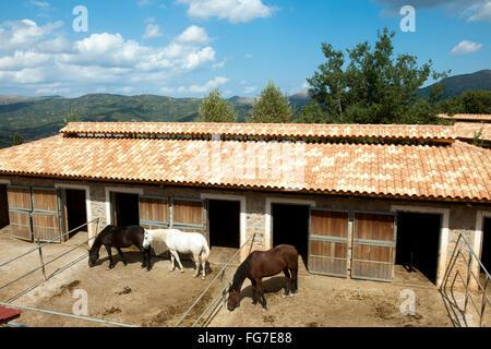 Griechenland, Kreta, Avdou, Odysseia Stables, Reiterhof - Stock Photo