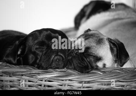 Close-Up Of Dogs Sleeping In Basket - Stock Photo