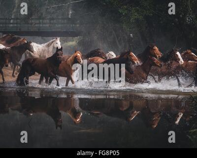 Horses Running On Lake - Stock Photo