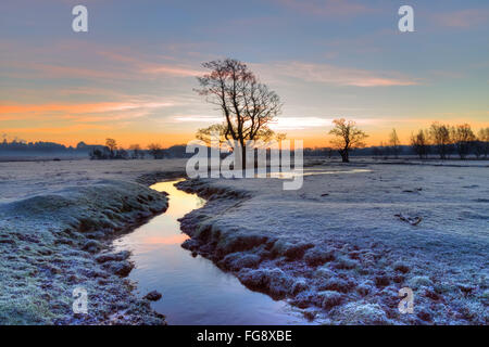 Longwater Lawn; New Forest; Lyndhurst; Hampshire; England; - Stock Photo