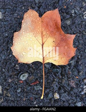 Directly Above View Of Wet Dry Leaf On Rock - Stock Photo
