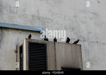 Pigeons Perching On Air Conditioner Against Wall - Stock Photo