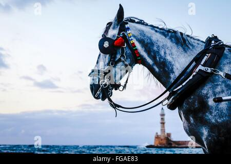 Close-Up Of Horse By Sea Against Sky - Stock Photo